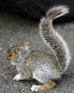 babysquirrel071